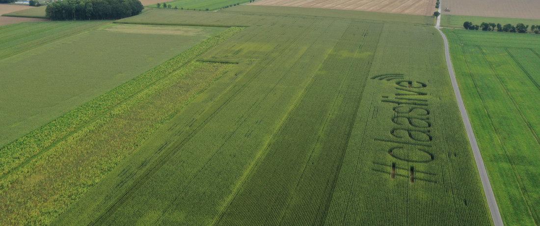 Das Mais-Ernte-Event.